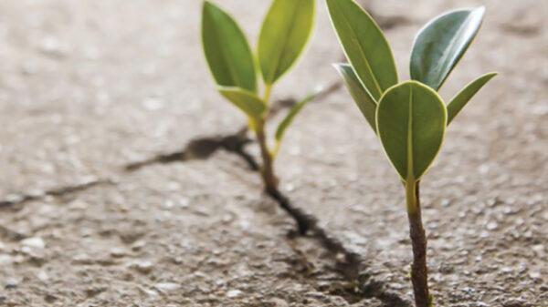 چگونه در مقابل مشکلات قوی باشیم | توصیه های کاربردی و مفید