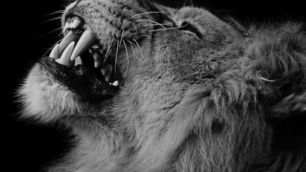 چطور شخصیت قوی داشته باشیم مثل یک شیر