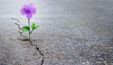تاثیر امیداوری بر زندگی و افزایش اراده
