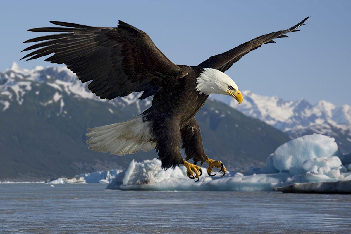 در سال جدید مثل عقاب زندگی کن ، نه مرغ هایی که اطرافت رو پر کردن