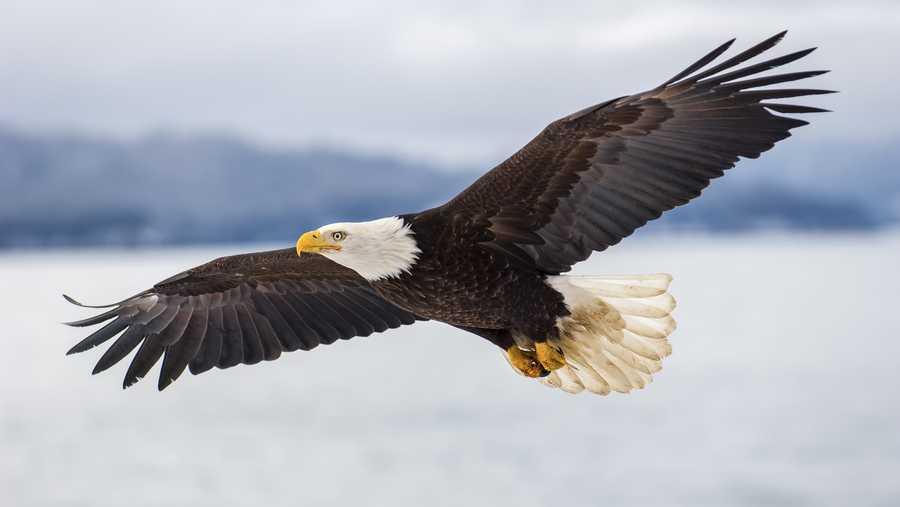 عقاب پرندهای با قدرت پیشبینی بالاست