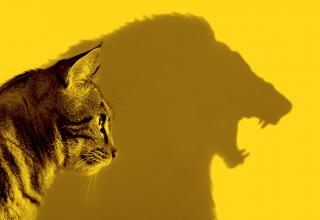 اعتماد به نفس چیست و چه اهمیتی دارد؟