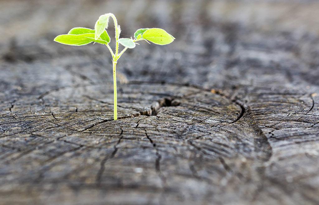چگونه امید به آینده را در خود بیشتر و بیشتر کنیم؟